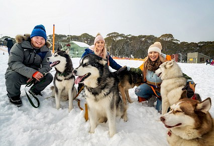 Snow Dogs and Tobogganing